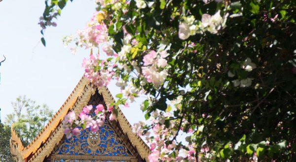 Jour 12 : Doi Suthep et nouvel an chinois