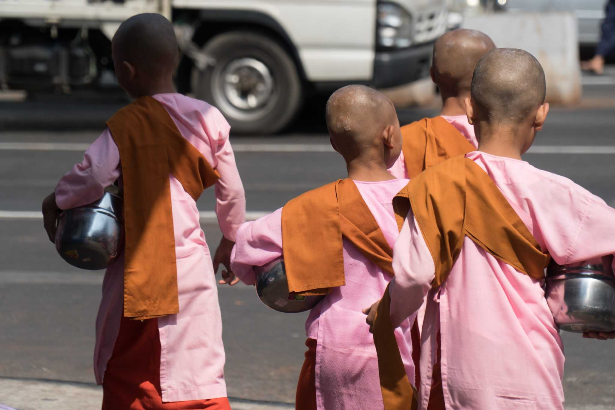 Des petits moines en quête de leur déjeuner
