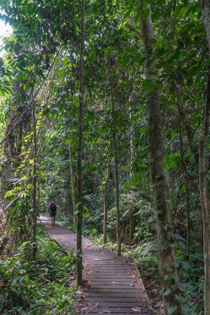 Balade sans guide au coeur de la jungle