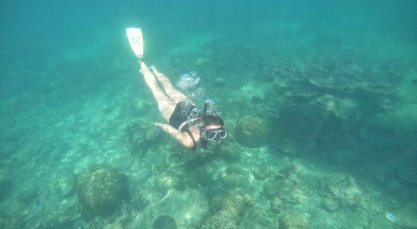 Jour 57 : Plongée au T3 et après midi snorkeling