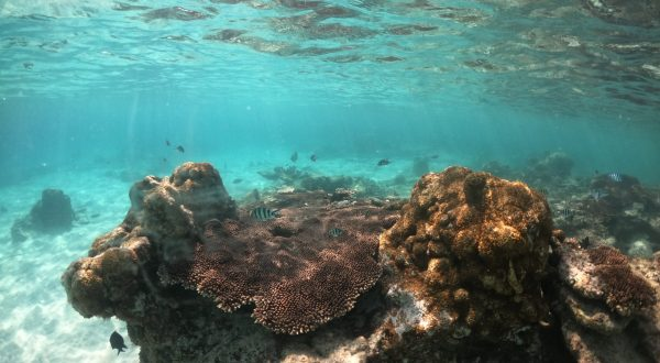 Jour 58 : Journée snorkeling sur Perhentian